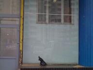 стекло в витрине - монтаж со стыковкой